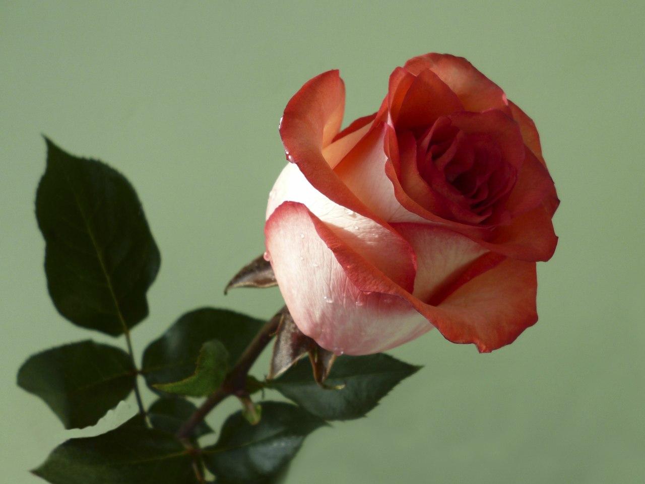 фильмы игры открытка розы для люды сделать открытку, возьмите