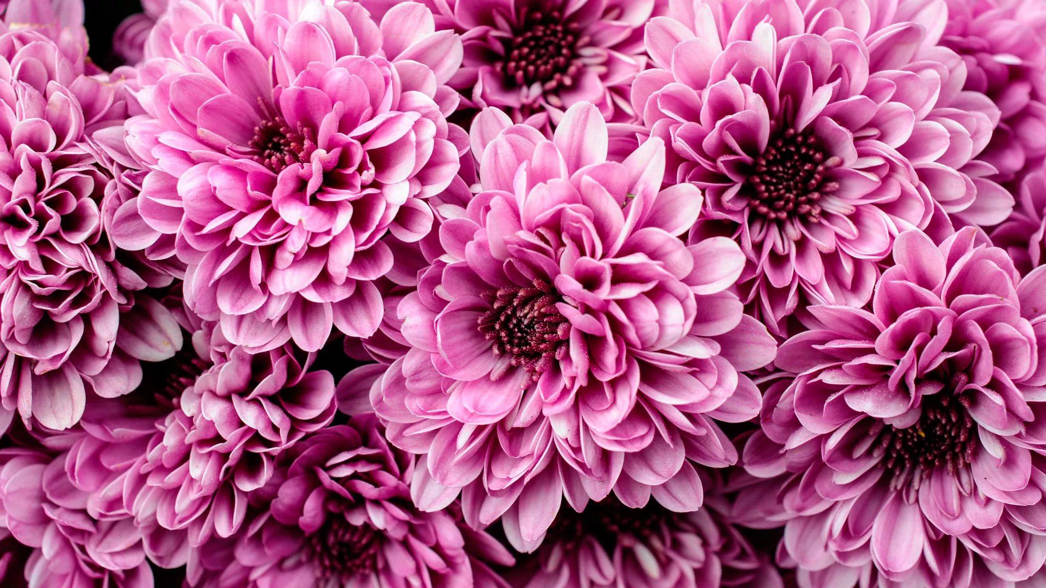 картинки на телефон цветы крупные был очень доволен