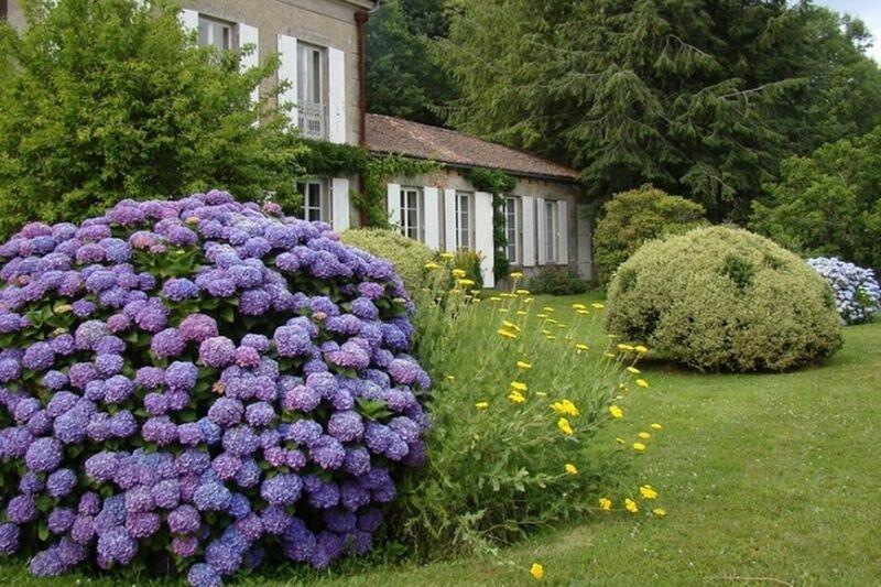 гортензиевый сад фото расскажем, как сделать