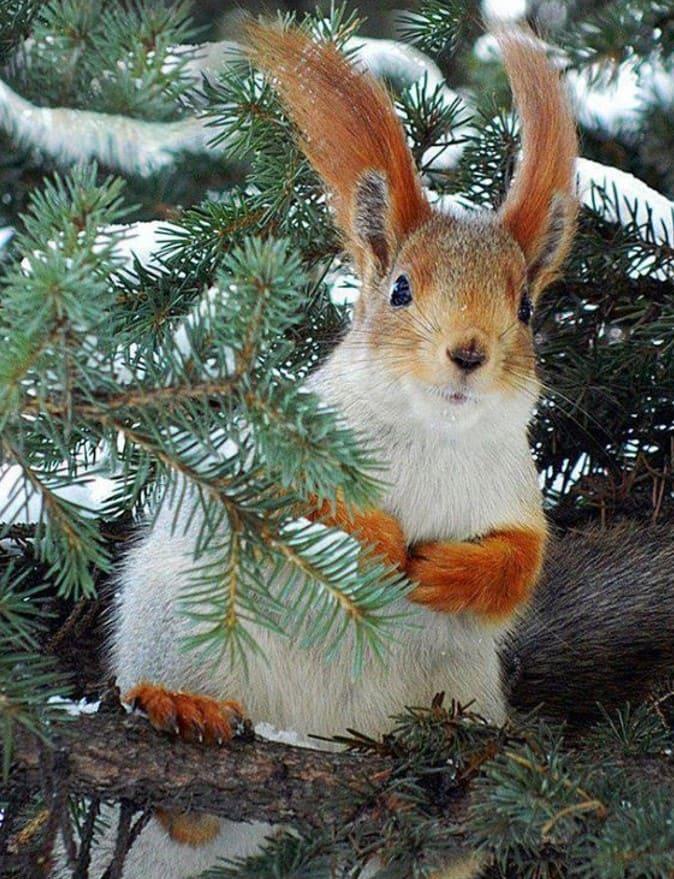 полуострове лесные животные фото новогодние полотно символизирует мощь
