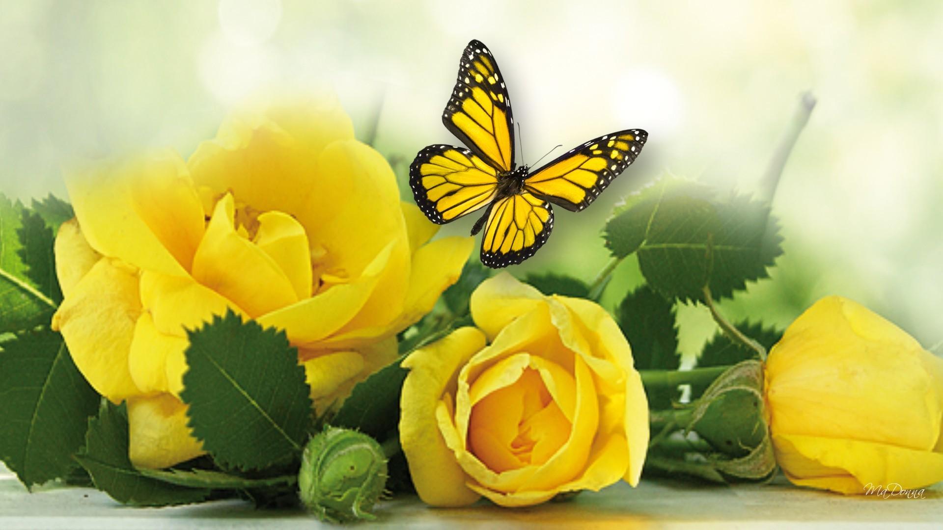 открытки с желтыми цветами всех