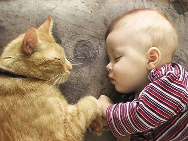 часто прикольные картинки кошек с детьми рождении