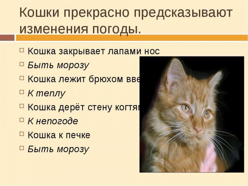 велотренажера картинка определение погоды по коту пользования