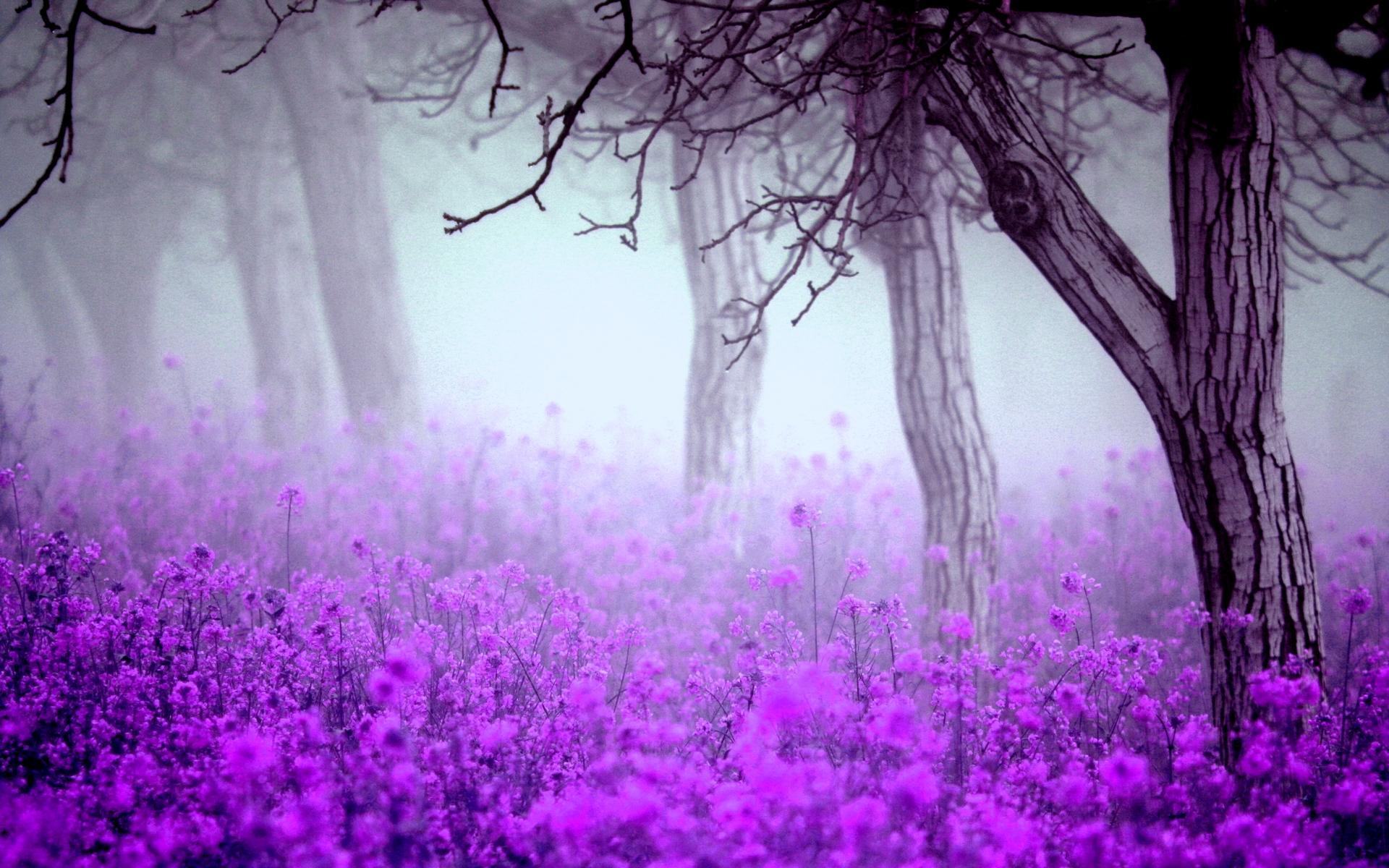 Пятидесятилетию мужчине, картинки фиолетового тона