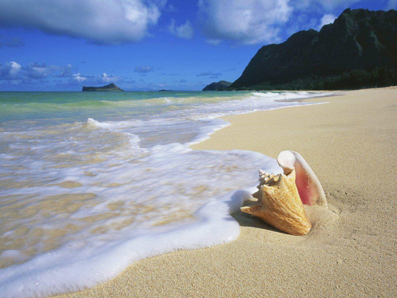 Смешные картинки с пляжем и морем, картинки тему свадьбы