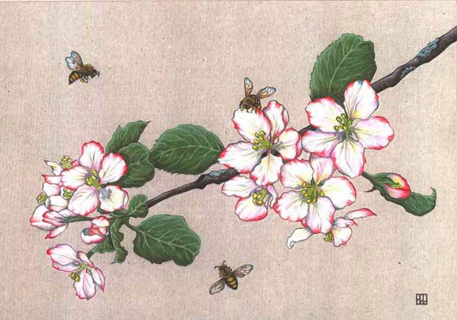 Веточка цветущей яблони рисунок
