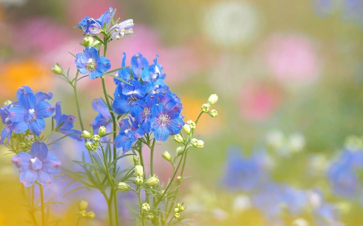 Картинка цветочка полевого