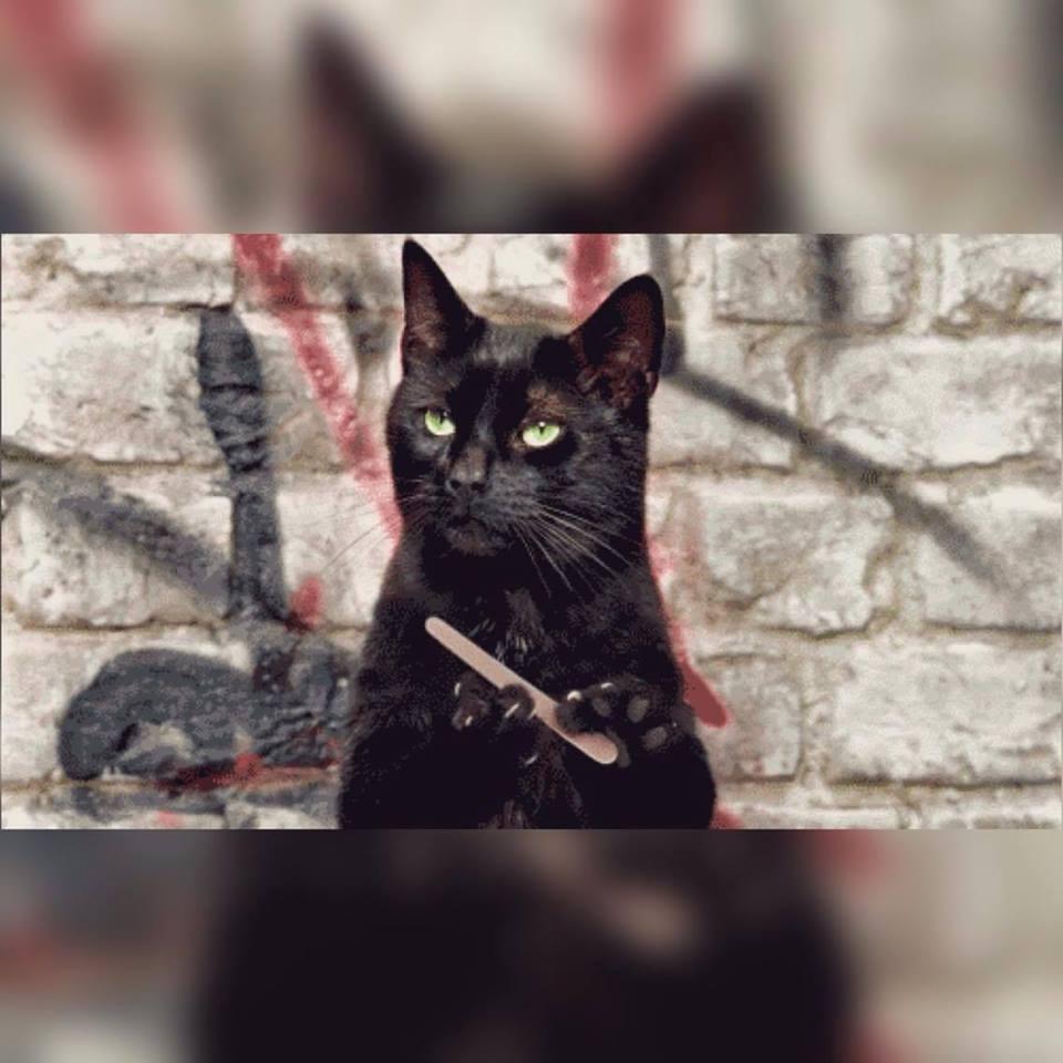 фото гифка черная кошка пилит ногти дождевая