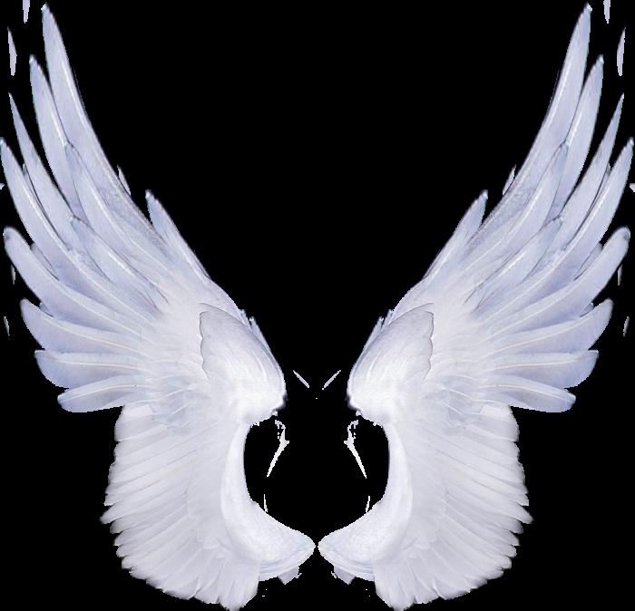 ангельские крылышки картинки фото