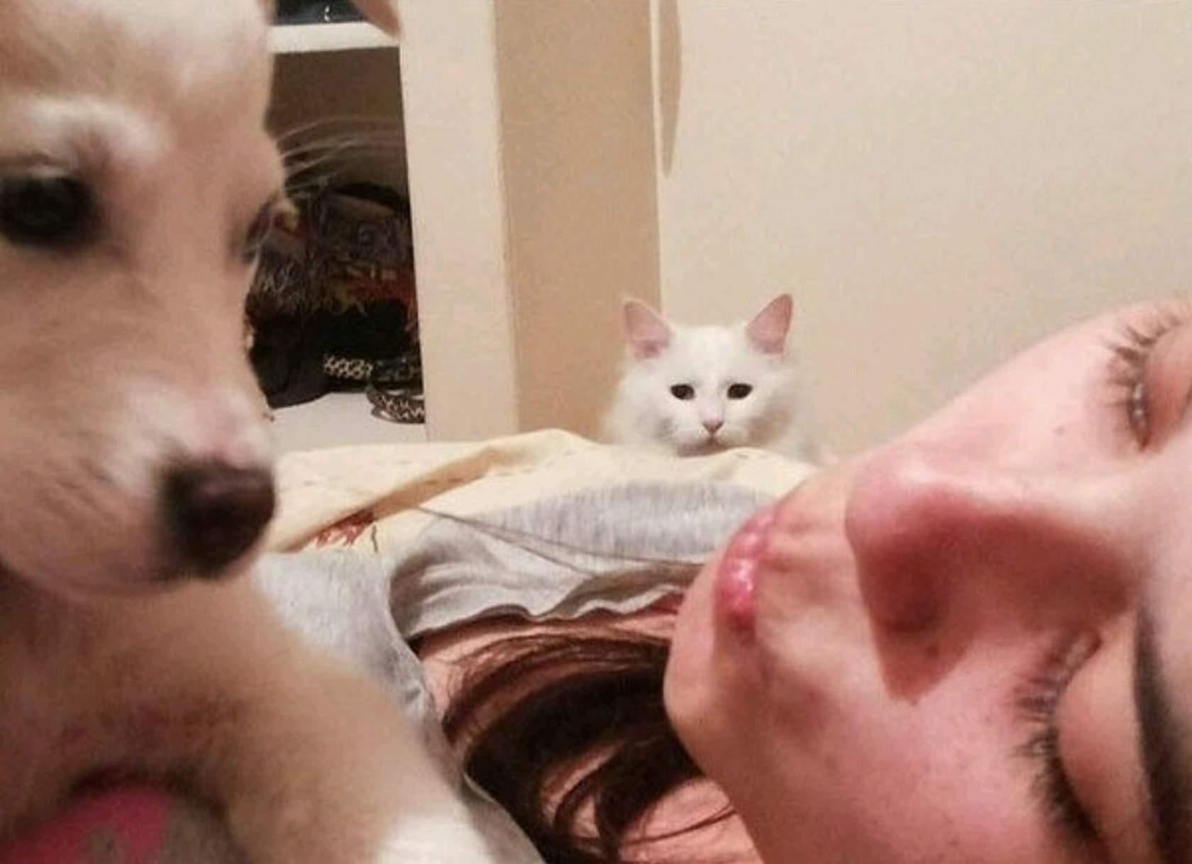 углы рисунка картинки ревнивая кошка наркотики