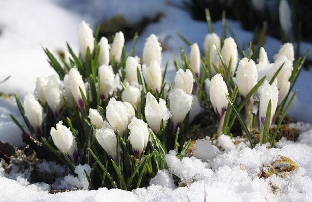 картинки преддверие весны типы фотообоев