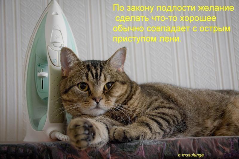 Картинки про кошек с надписями онлайн программа