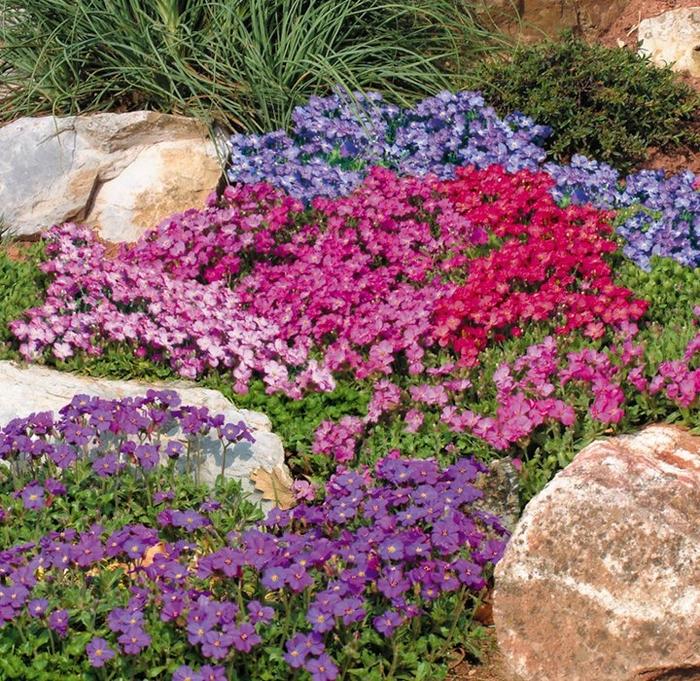 Почвопокровные растения на клумбу