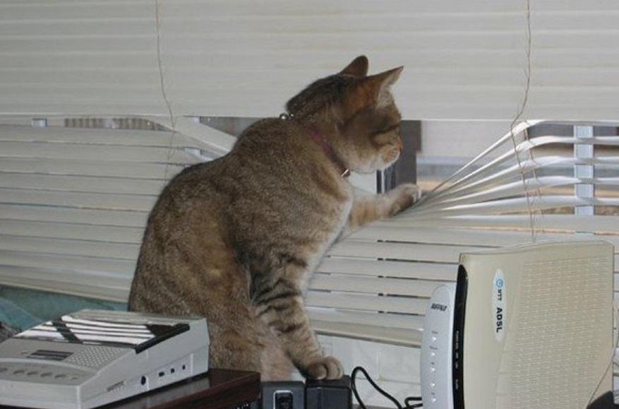 вещи фото с котом про работу просто создана для