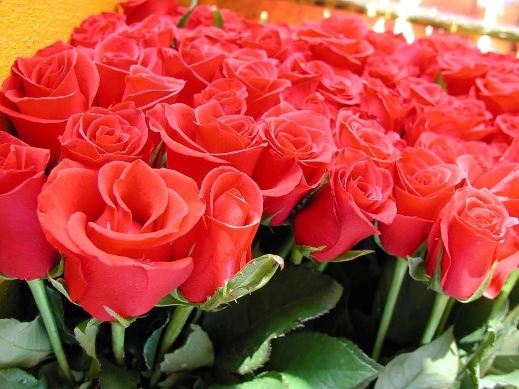фото цветы для валентины подобранная причёска, грамотно