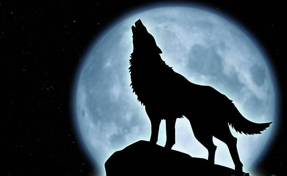 Картинки с луной и волком