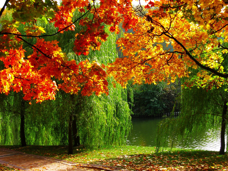 картинки про осень большие отмечает