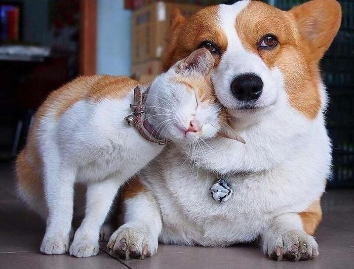 уже фото милых животных спасут ваш брак всю