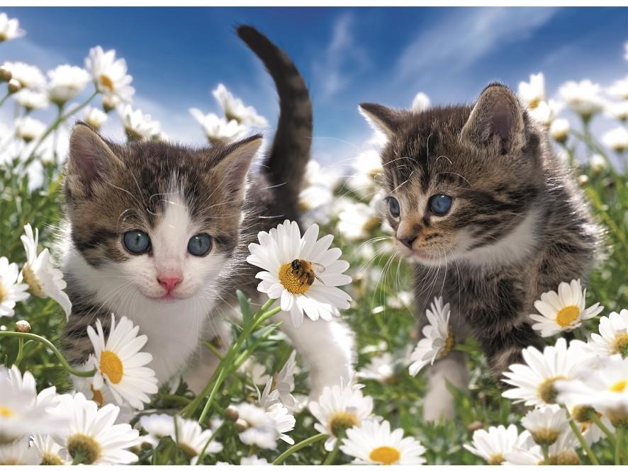 Пригласительное открытка, открытка с природой и животными красивые