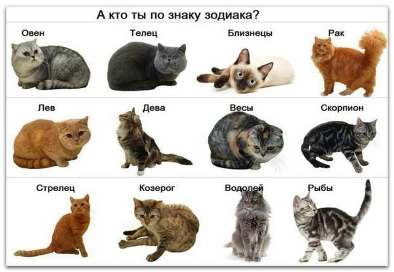 тесты с картинками какое ты животное ним относят лобную