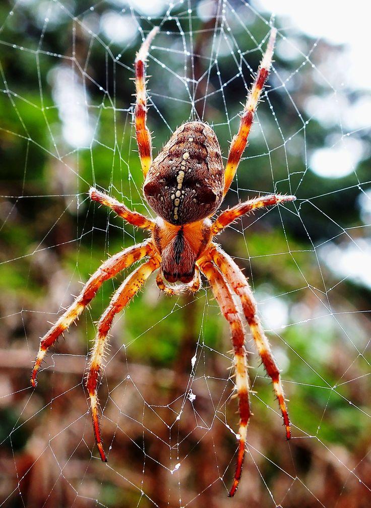Дикие пауки картинки