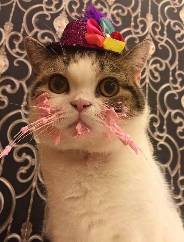 Картинка с днем рождения с котом