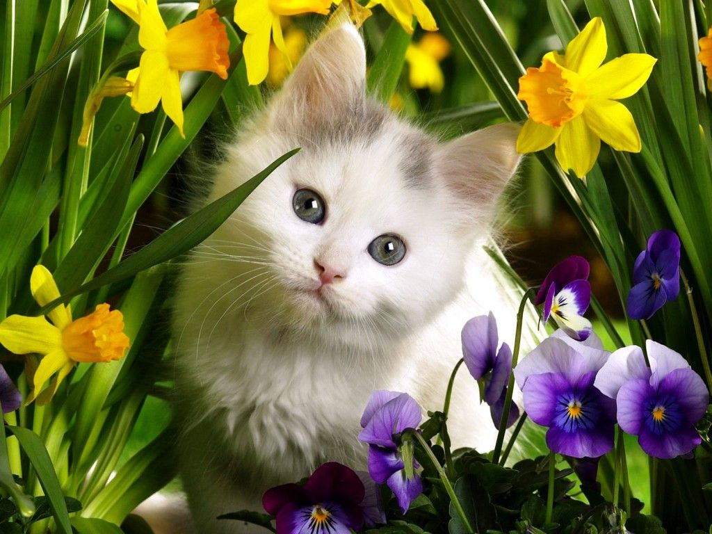 Весна открытки с животными