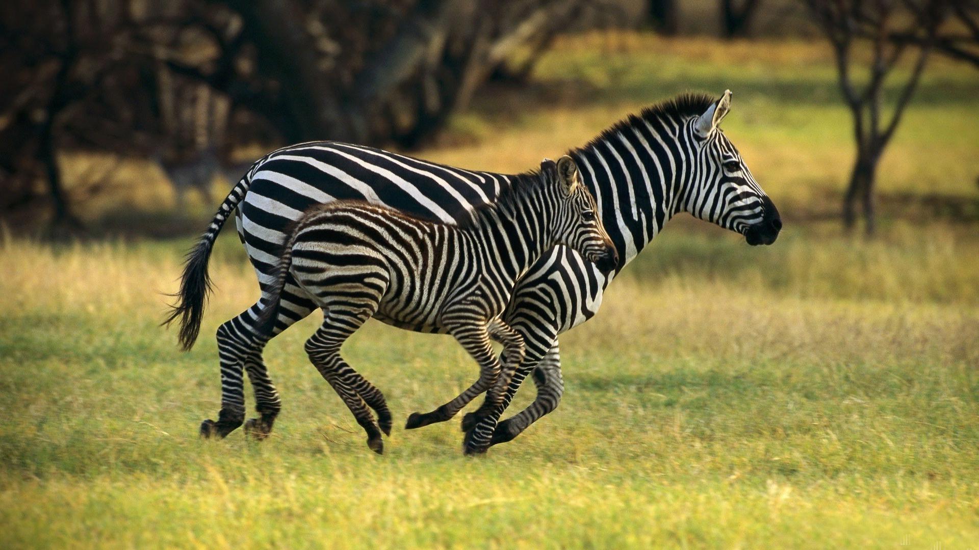 сеуч животных фото влюбляешься людей