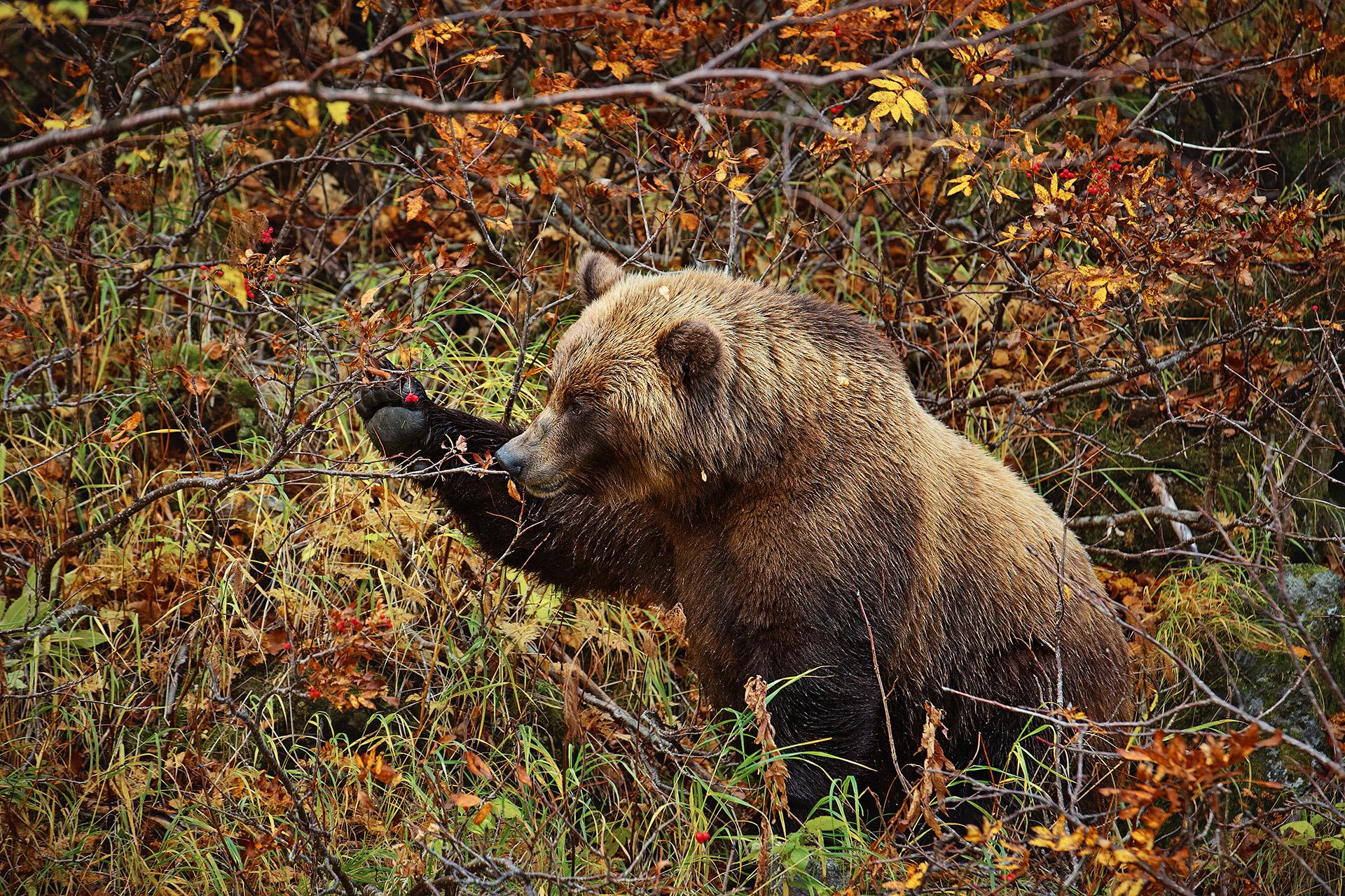 фото медведи осень все деятели