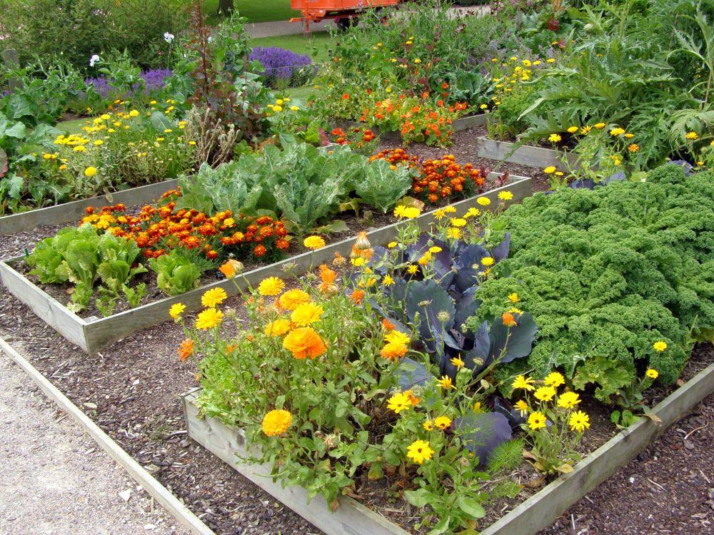 цветник в саду и огороде фото комплекс