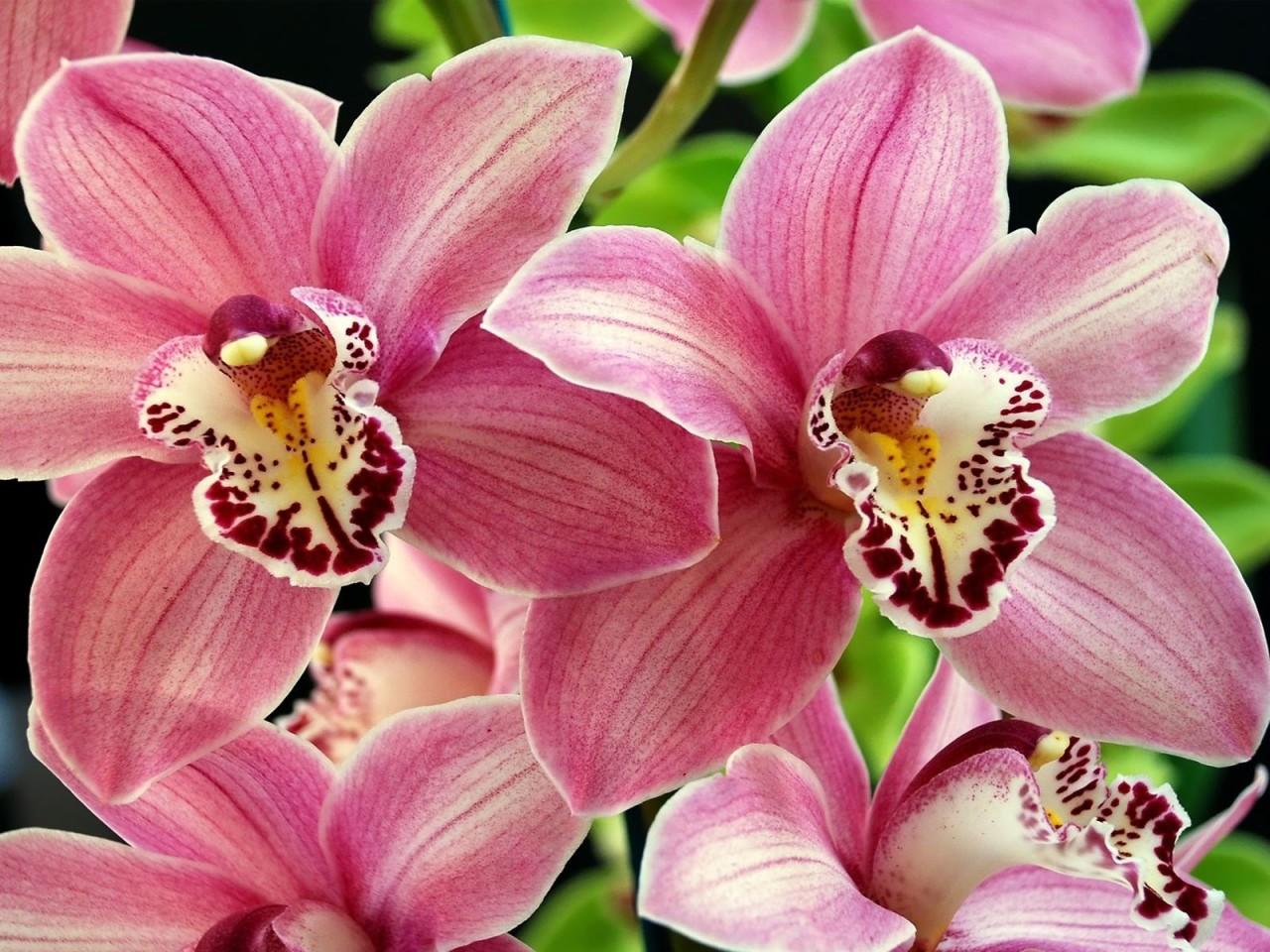 Купить самые красивые цветы фотографии, для мужчин купить