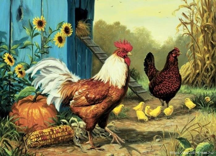 Картинка семьи курицы