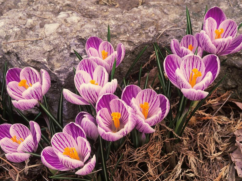 Картинки красивые цветочки