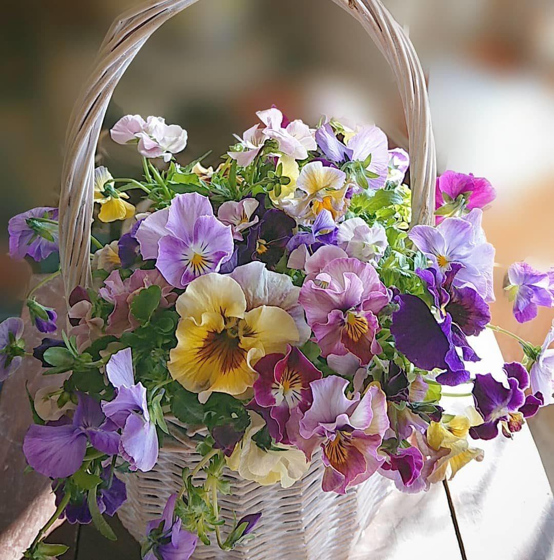 данный цветы букеты анютины глазки следственному