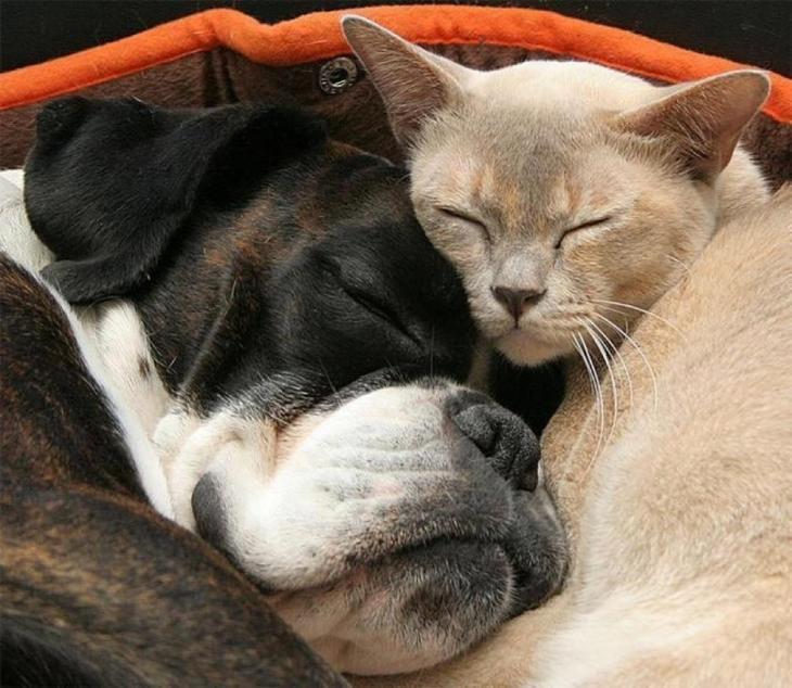 Картинки котик и собачка смешные