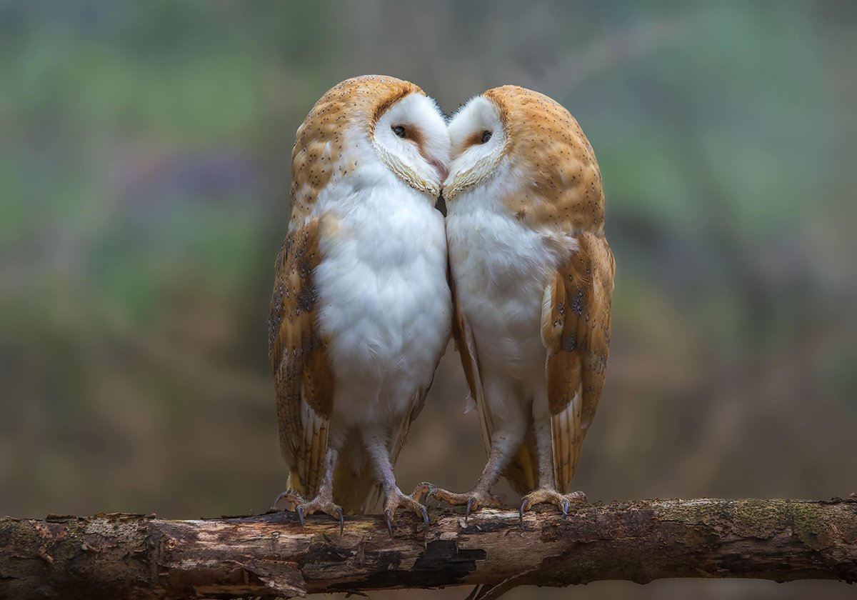 Картинки про любовь птицы