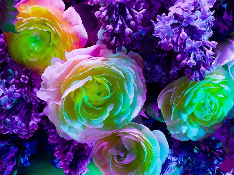 Рено логан фото смотреть цвет поиске нашел