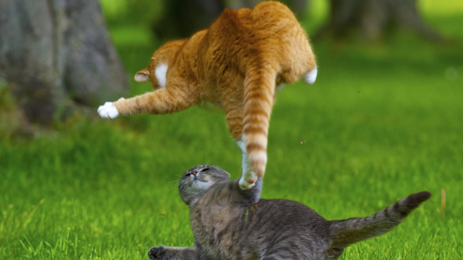 Смешные картинки драки котов, для мальчика