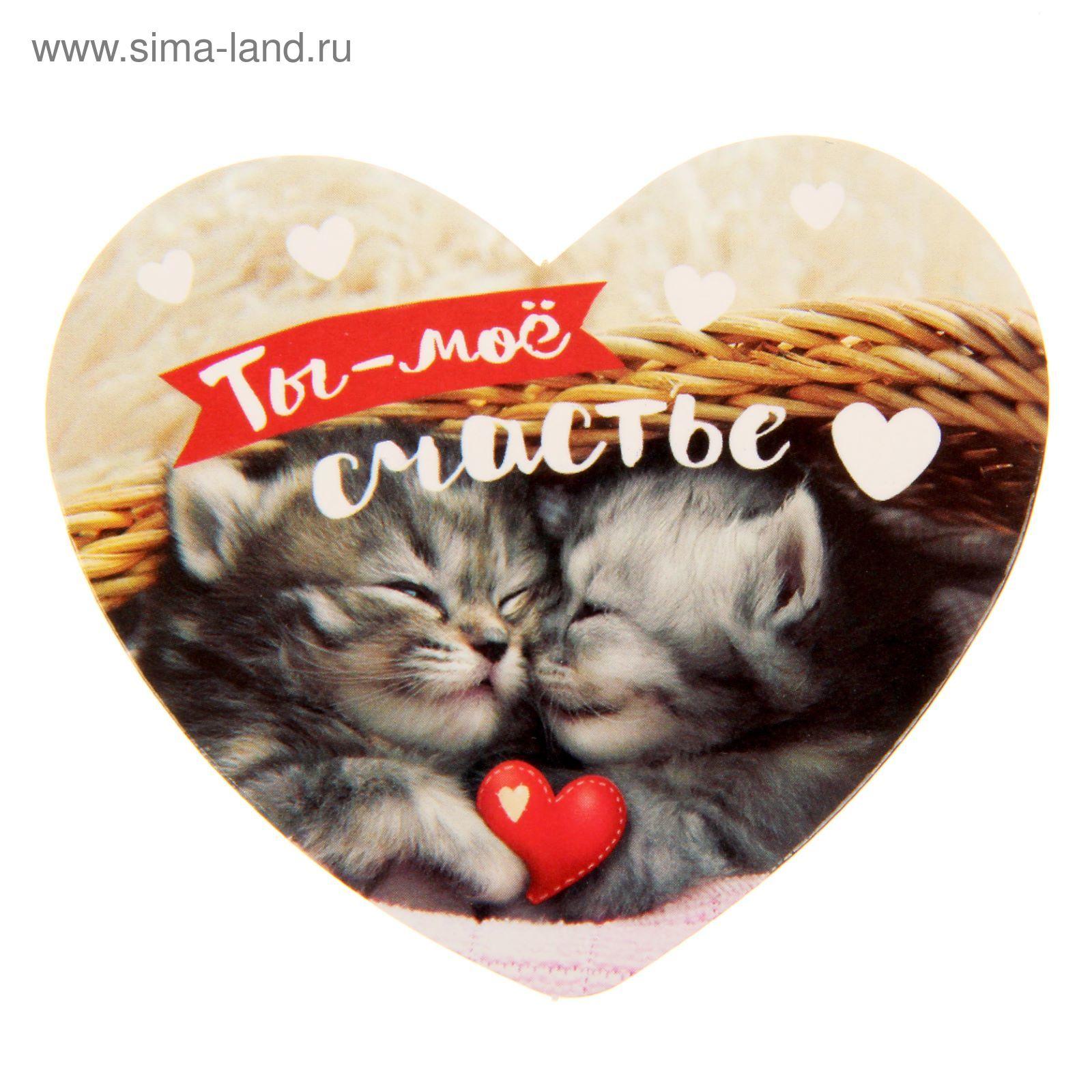 Любимому котеночку картинки