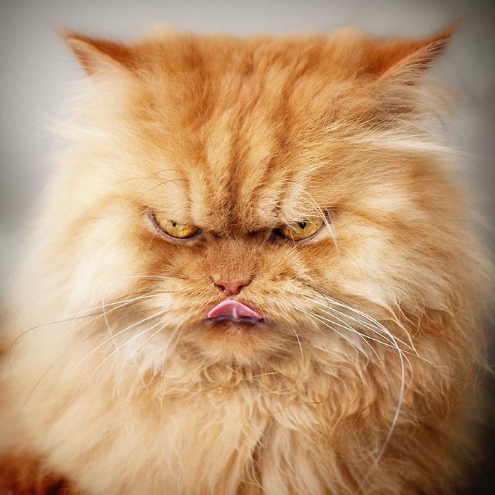 Очень злые кошки картинки