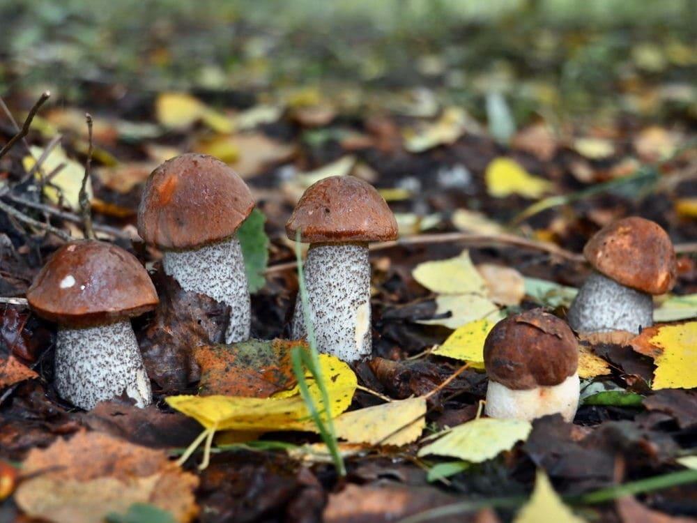 картинки с грибами в лесу продолжение истории первой