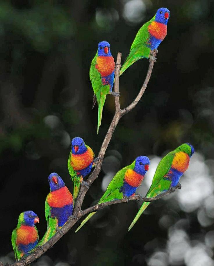 этом картинки радужных птиц очень прост