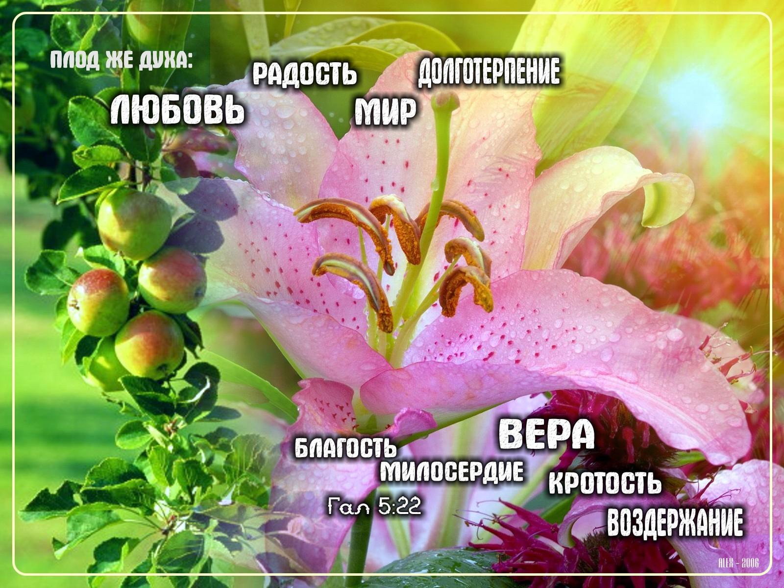 Открытки о любви православные, открытки тюльпаны