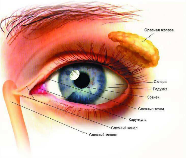 Высыпания на коже при болезни печени: фото кожных проявлений и сыпи.