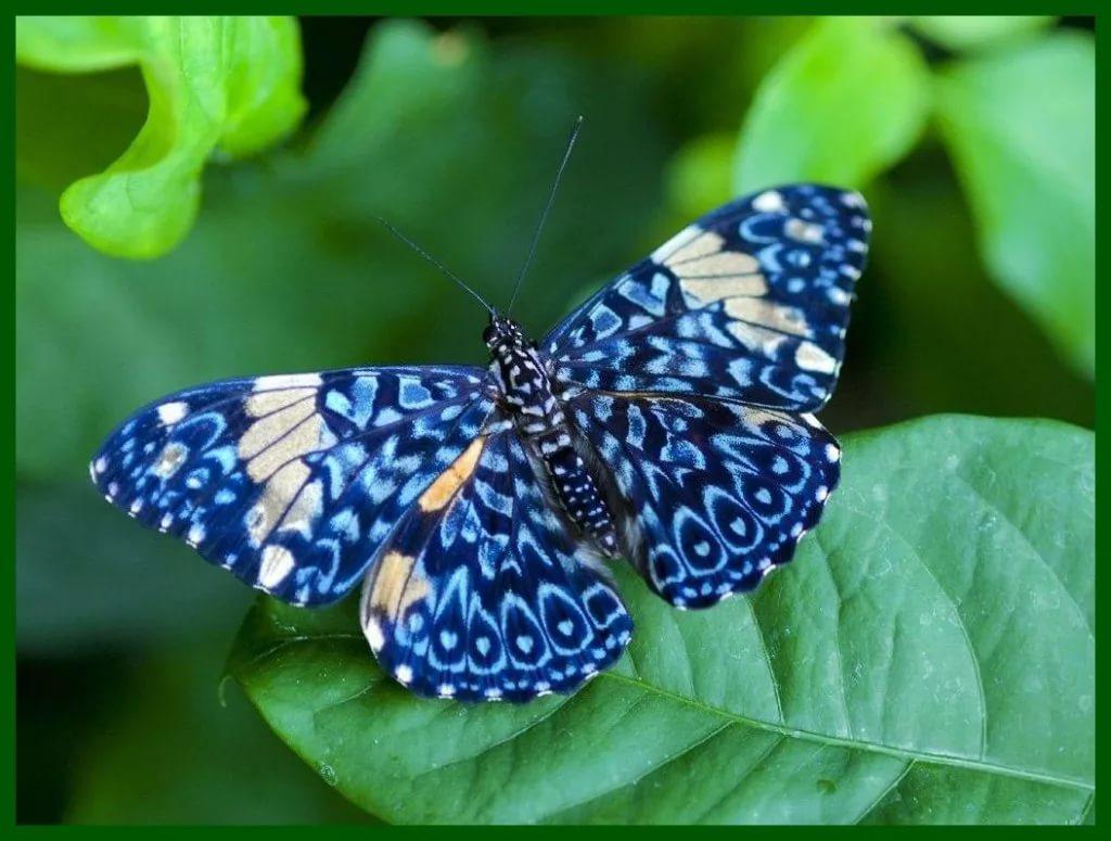 25-летним юбилеем, бабочки фото красивые картинки