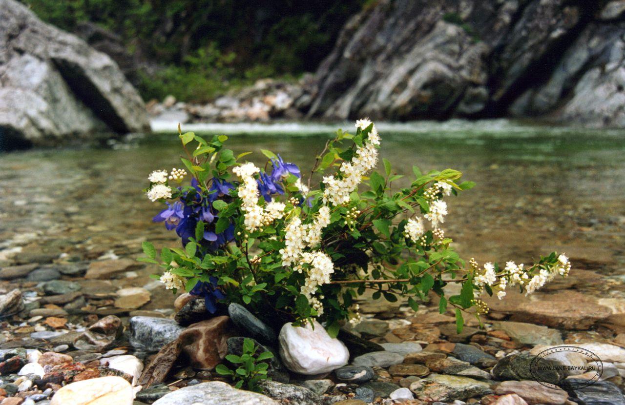 заметное цветы и птицы фотографии озера байкал двумя