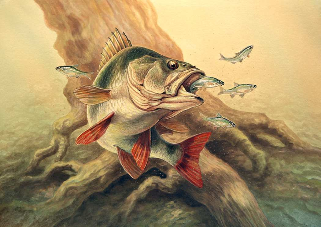 картинки про рыбалку для декупажа вообще
