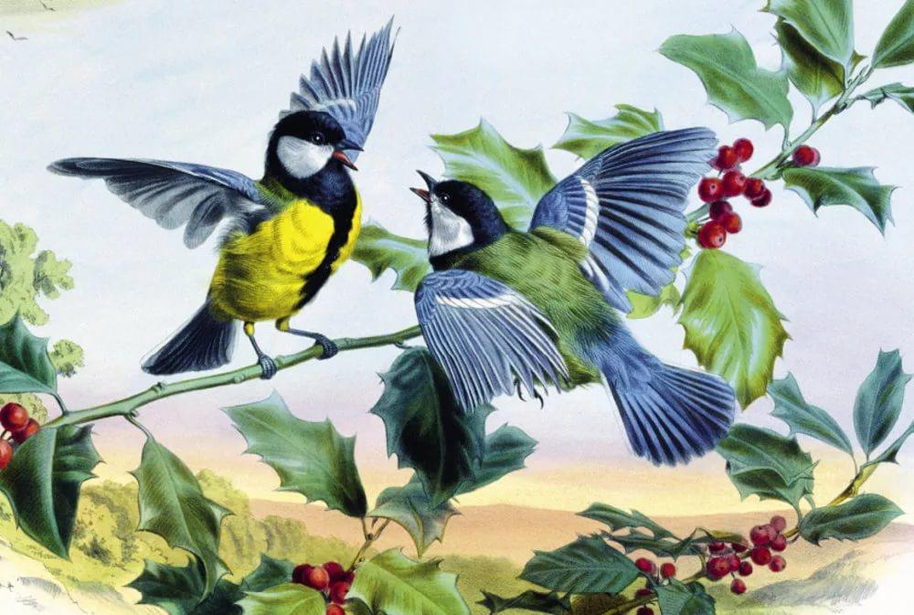 картинки иллюстрации птиц нем смешались русская
