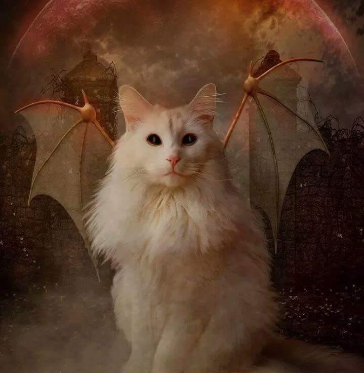 Картинки адские котики