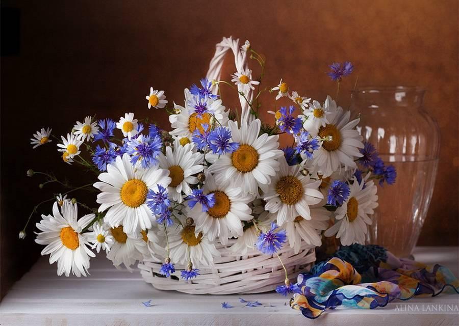 Открытка с цветами ромашки